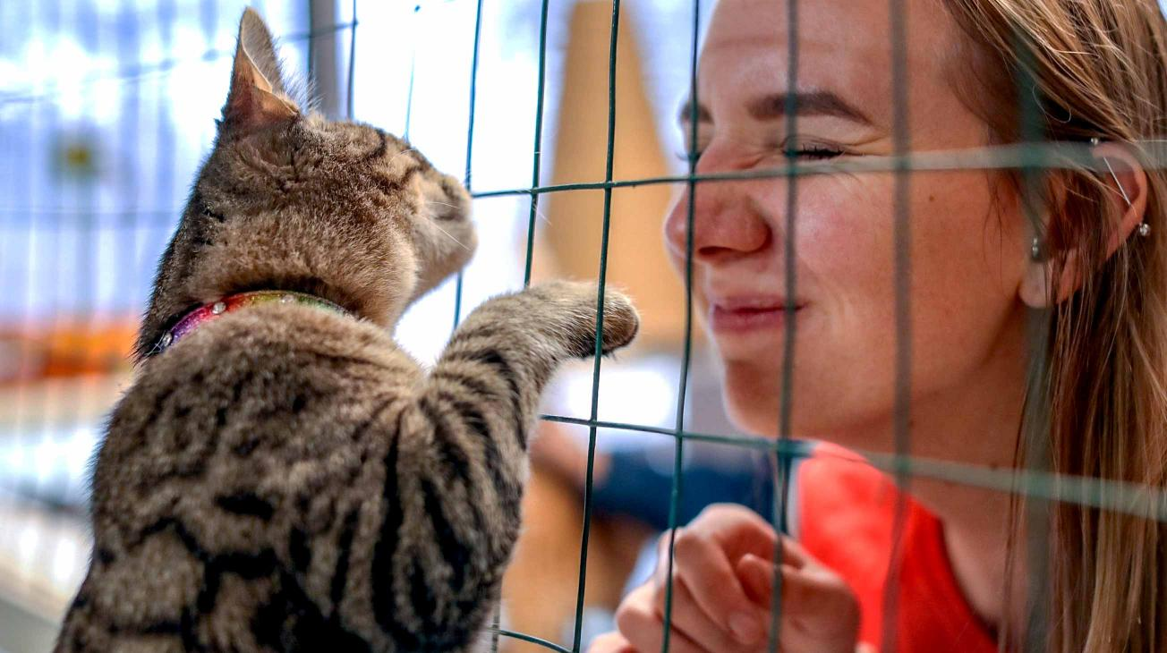 woman wrinkling her nose at pawing cat in cage